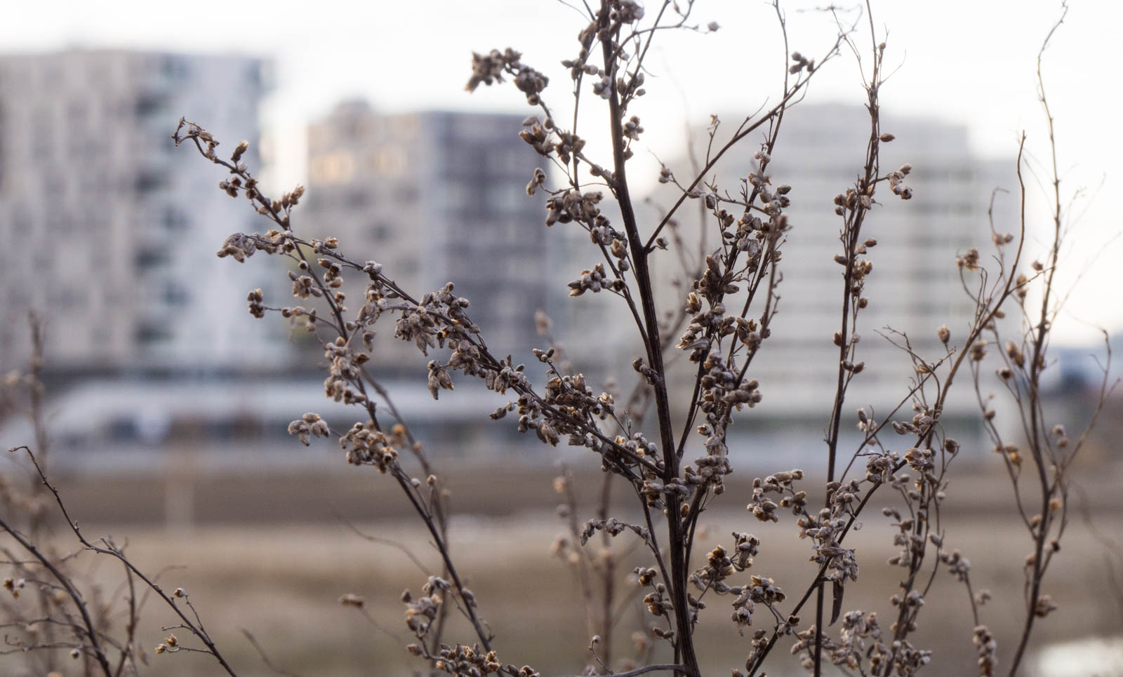 Winter Flora 7