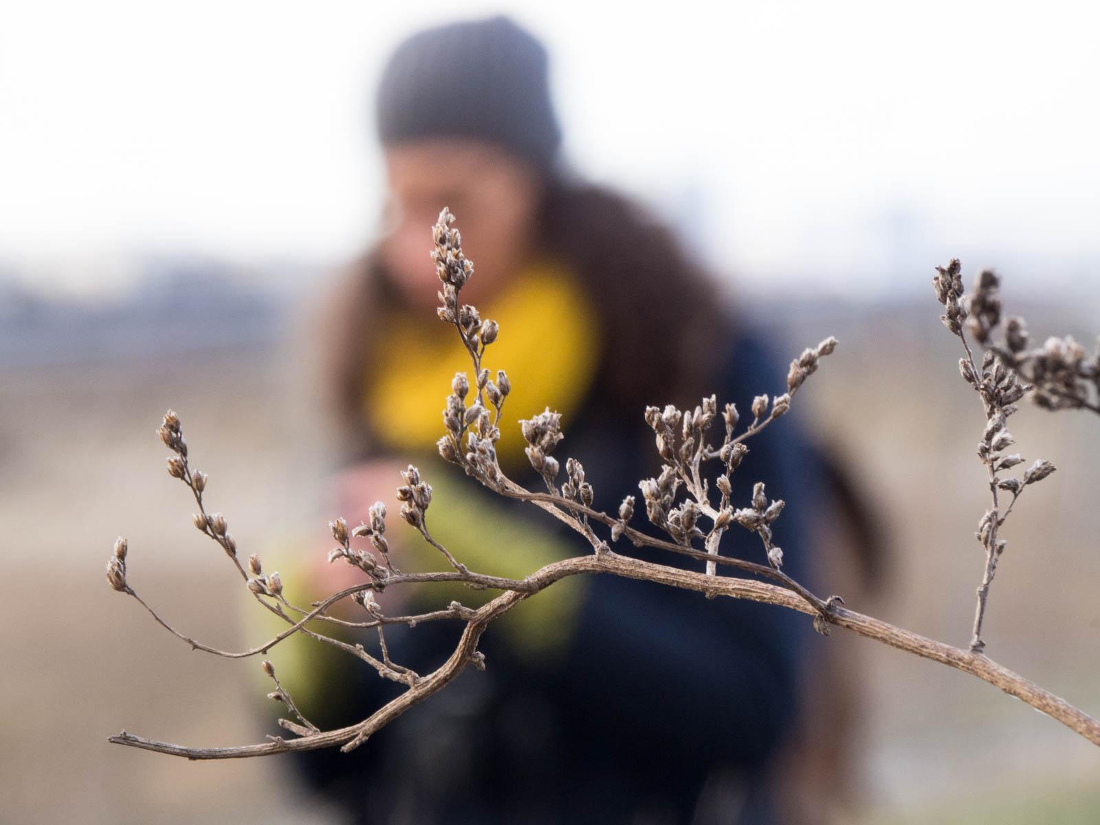 Winter Flora 8